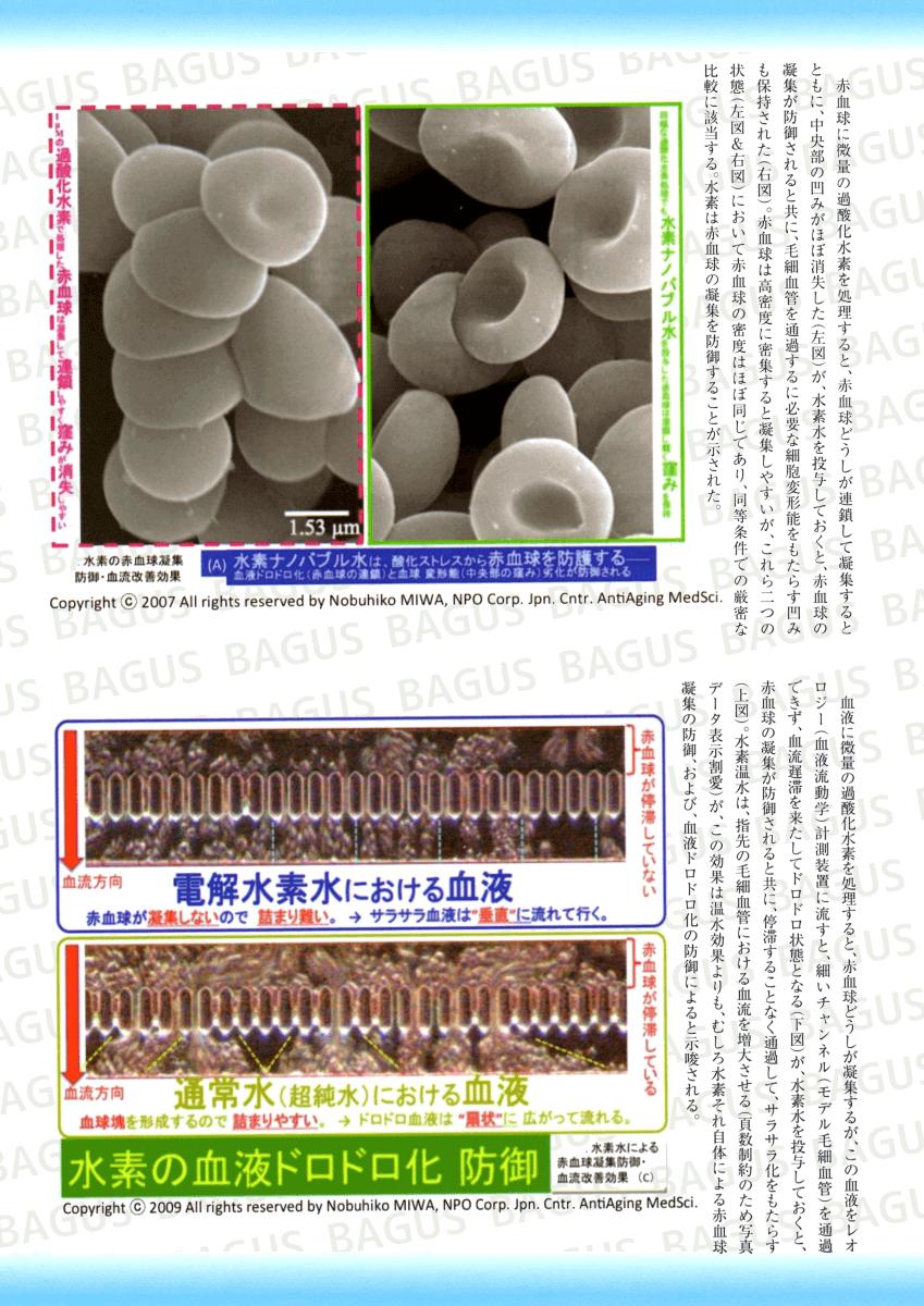 電解水素水における血液